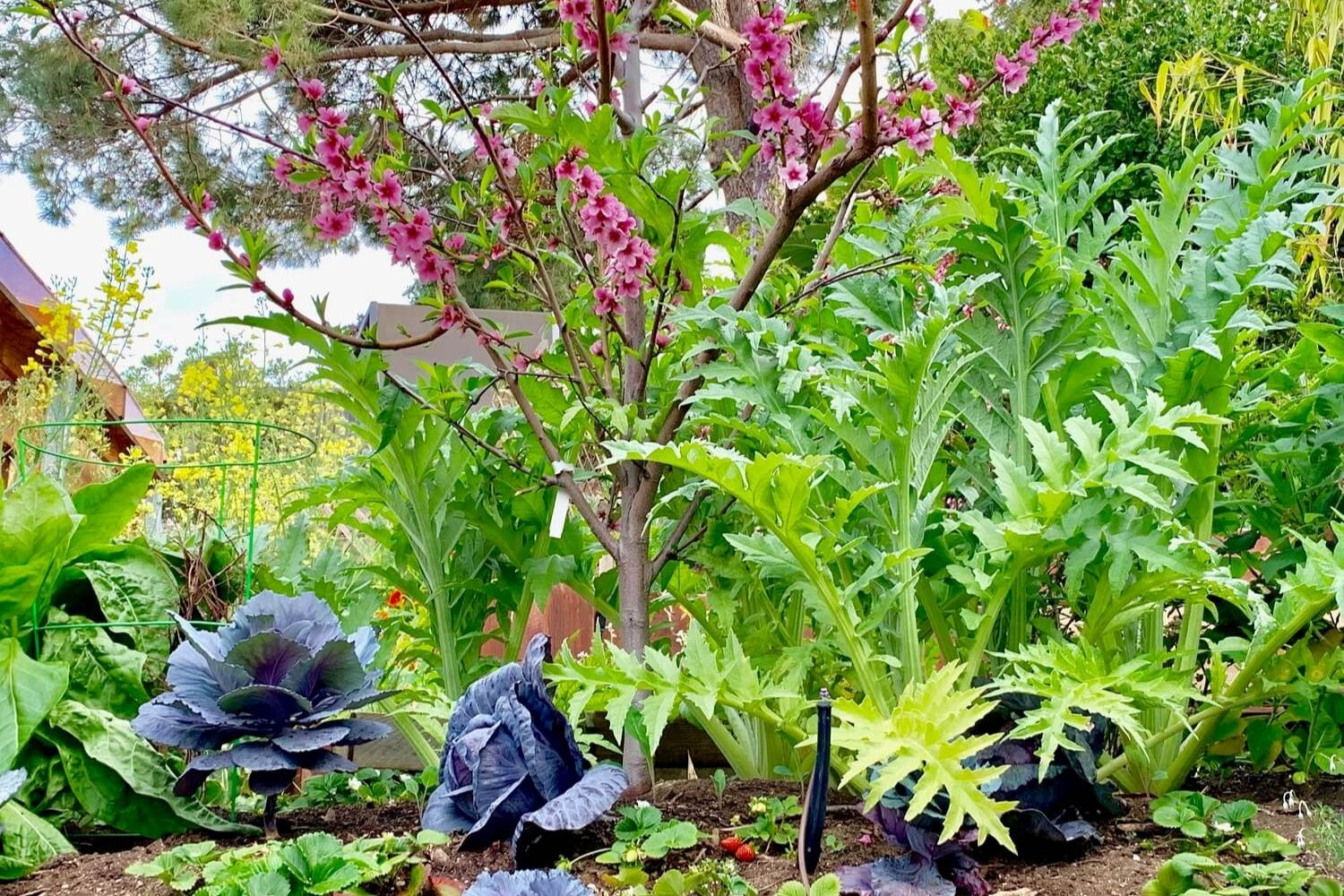 plants produced by biodynamic farming at Inn at Moonlight Beach